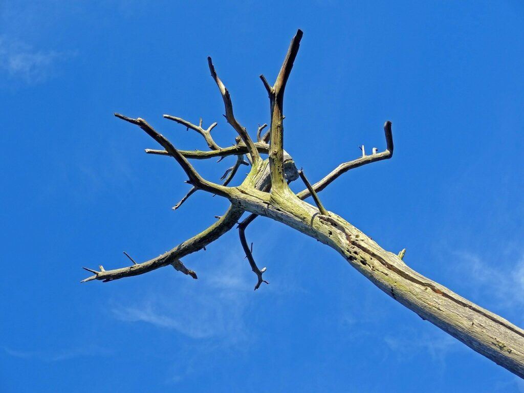Image result for dying tree